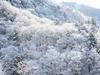 雪景色 (大桑村)