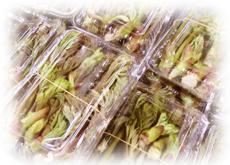 農産物 山菜